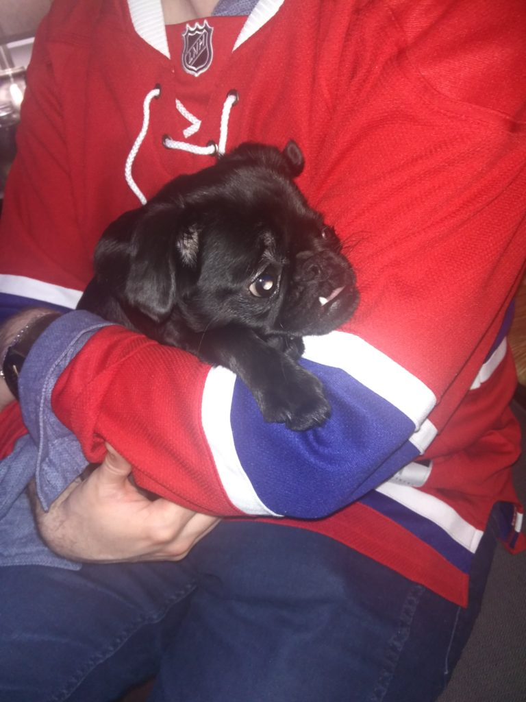 Pup cradled in the arms of a Habs fan